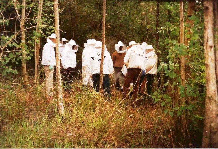 Dia do Apicultor: renda e preservação do meio ambiente são resultados da Apicultura