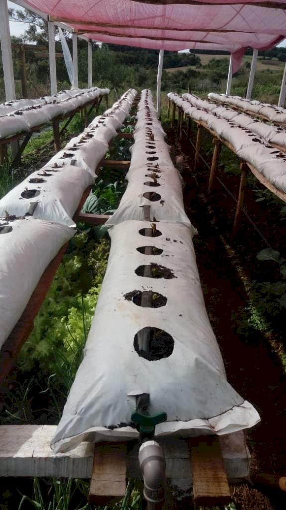 Fruticultura avança em São Paulo das Missões