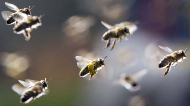 Morte de abelhas volta a preocupar