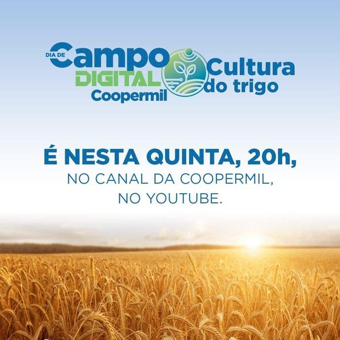 Dia de Campo Digital da Cultura do Trigo da Coopermil será dia 08/10 às 20h