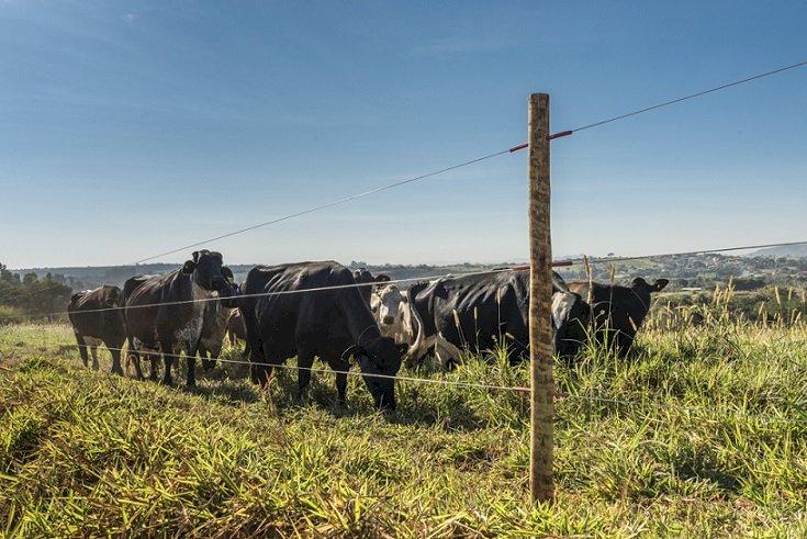 Dicas da Rauber Fábrica de Telas para construir uma cerca elétrica rural