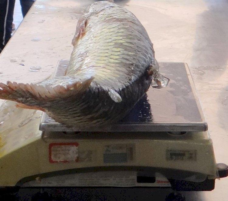 Semana Santa estimula comercialização de pescado na região de Santa Rosa