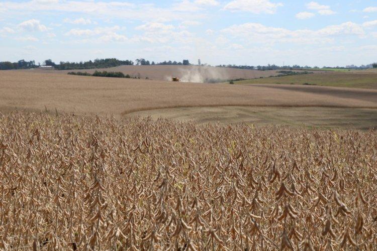 Colheita da soja avança 12 pontos percentuais no RS