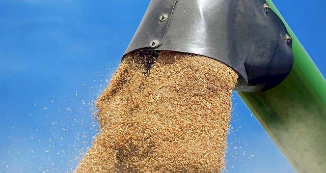 Outra gigante agro compra milho da Argentina e Paraguai