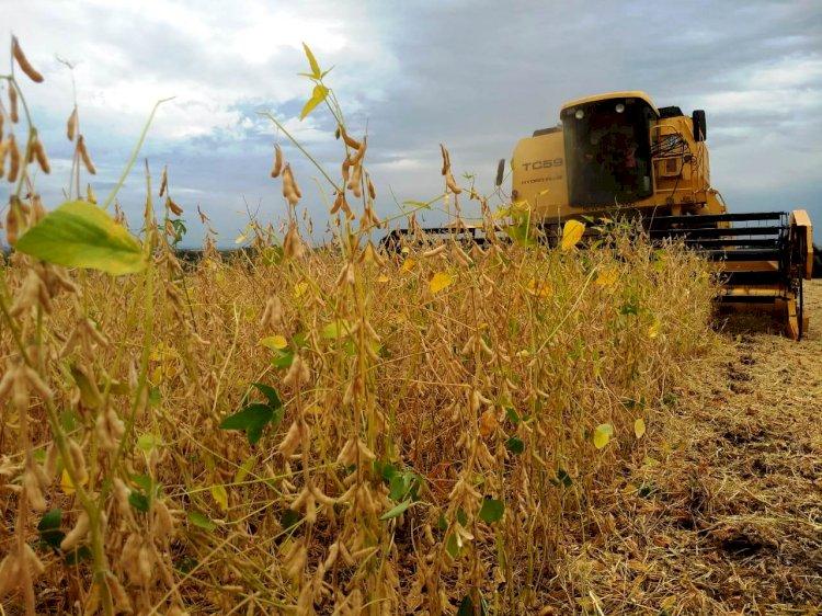 Assunto: Colheita da soja atinge 80% área no RS
