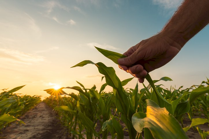 Empresários e gestores rurais revelam otimismo com as três próximas safras