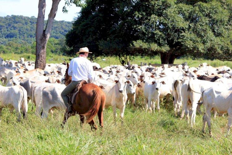 Doenças infecciosas comprometem desempenho dos bovinos e aumentam custos de produção