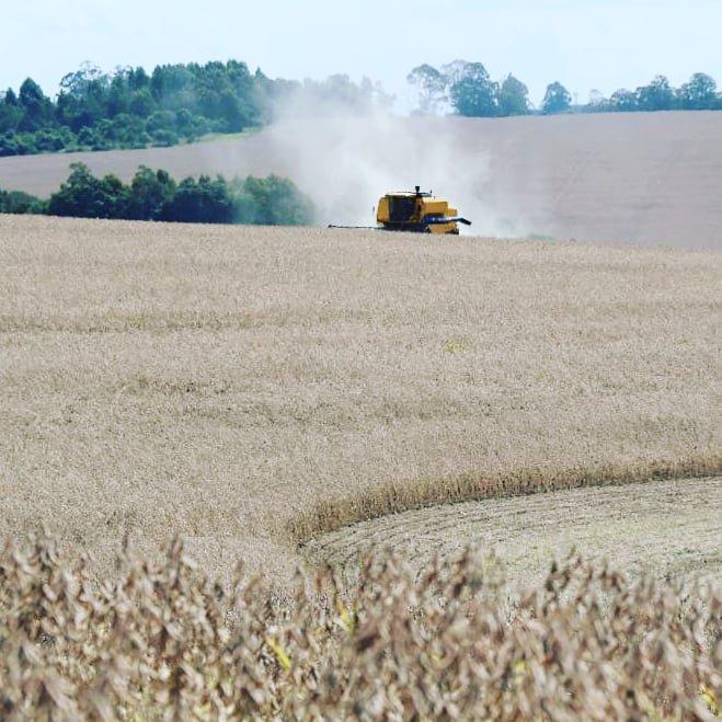 Colheita da soja está tecnicamente encerrada no Estado