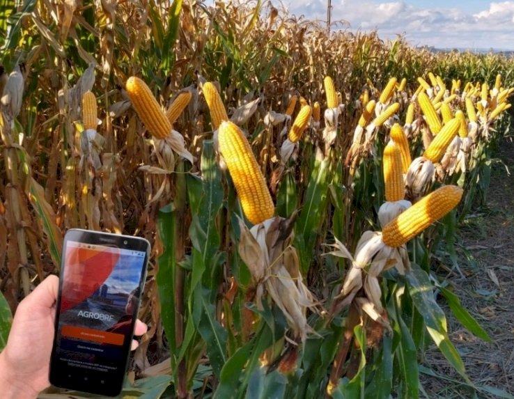 Produtores integrados da BRF podem negociar grãos por aplicativo