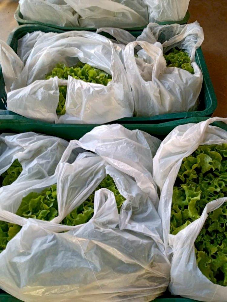Agricultores de Porto Vera Cruz e Porto Lucena fornecem alimentos através do PAA