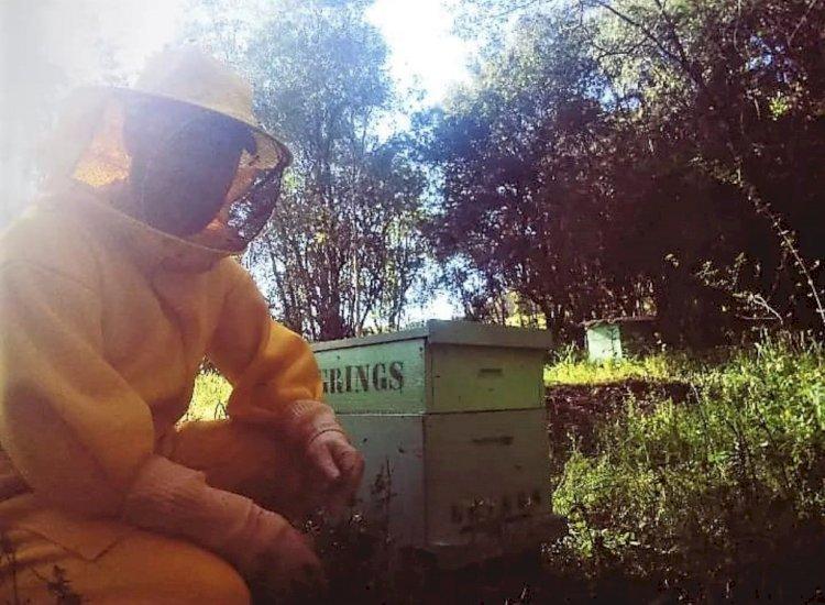 Apicultor de Santa Rosa se prepara para agroindustrialização do mel